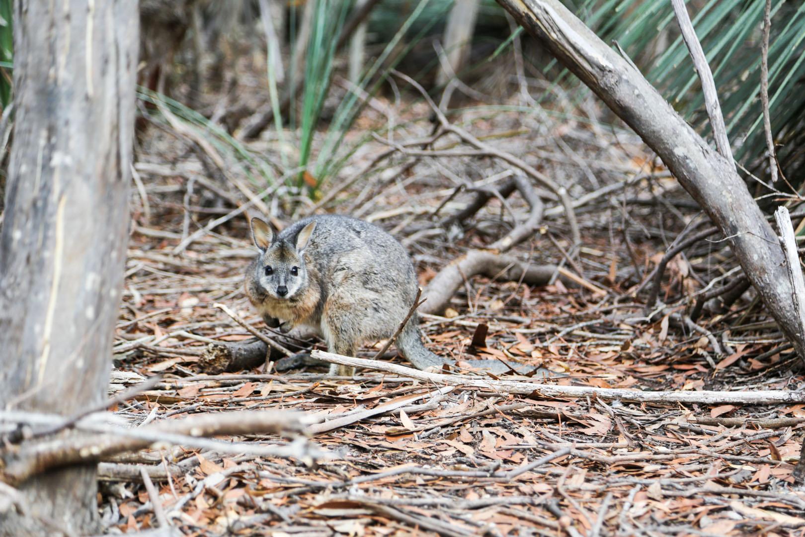 Kangaroo Island-1-2