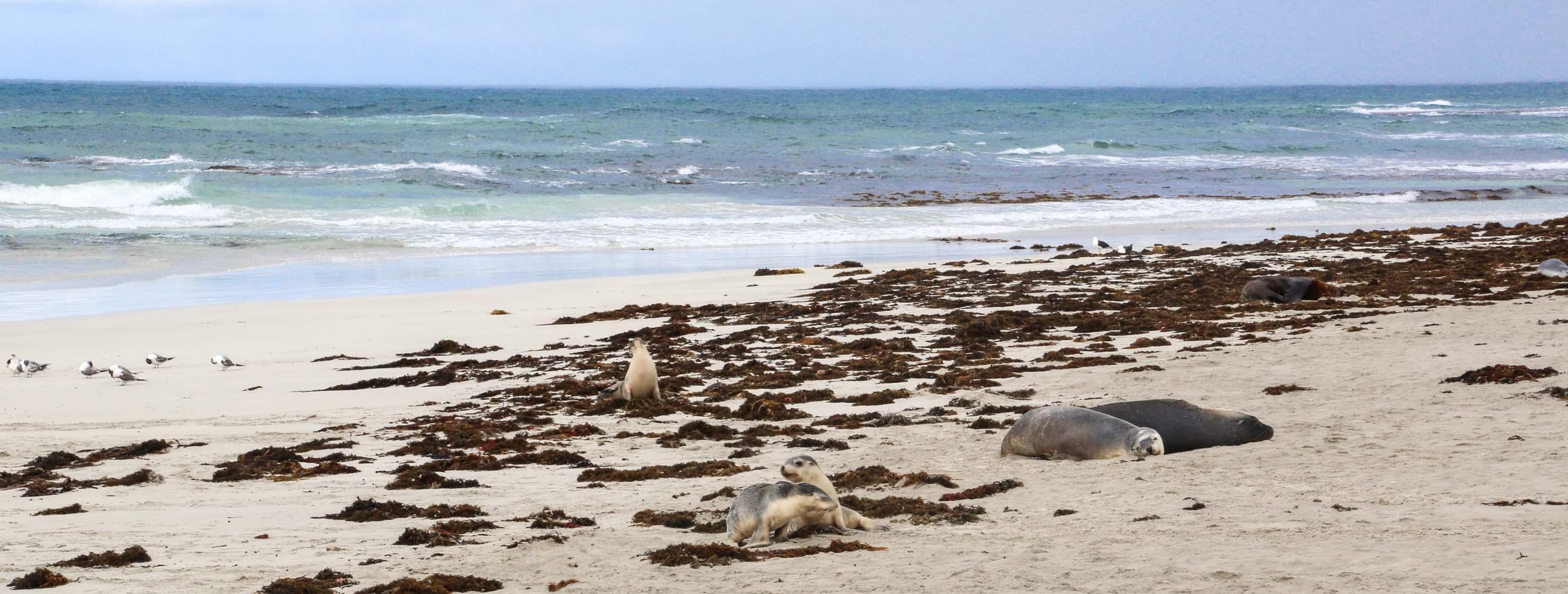 Kangaroo Island-2-3
