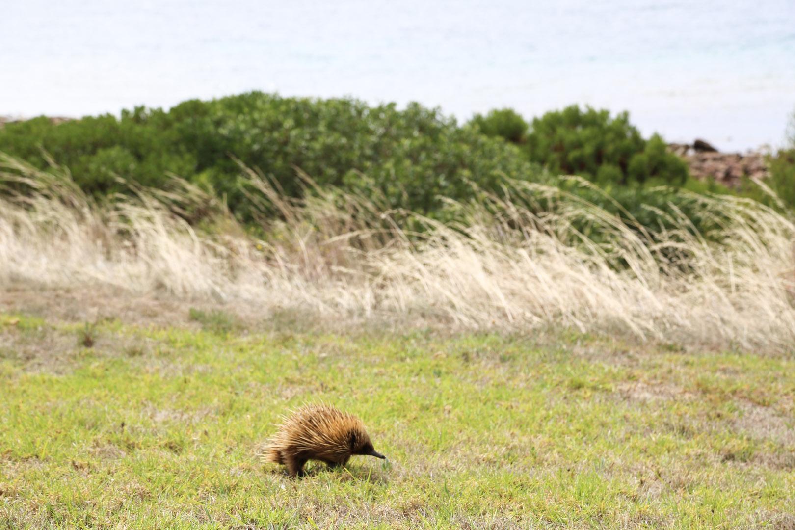 Kangaroo Island-3