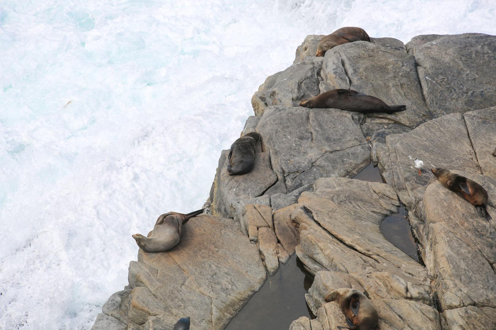 Kangaroo Island-8