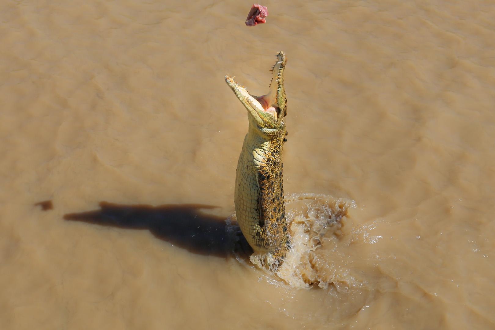 Jumping crocs-1