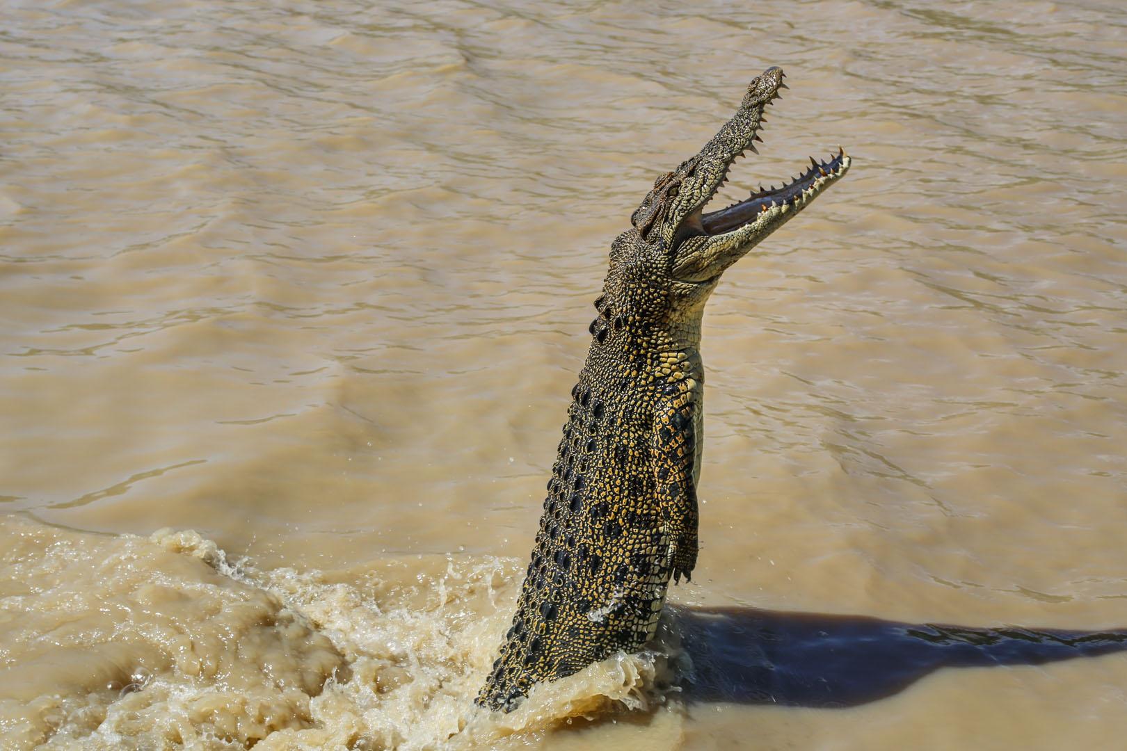 Jumping crocs-4