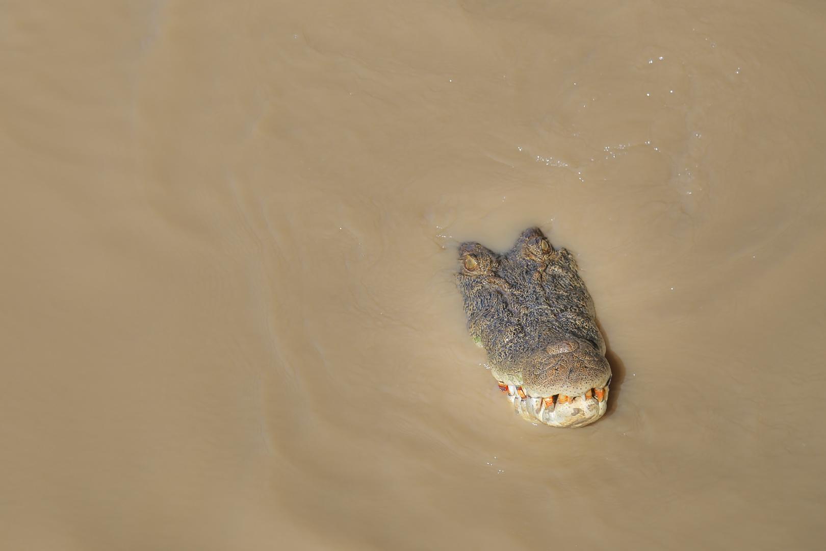 Jumping crocs-6